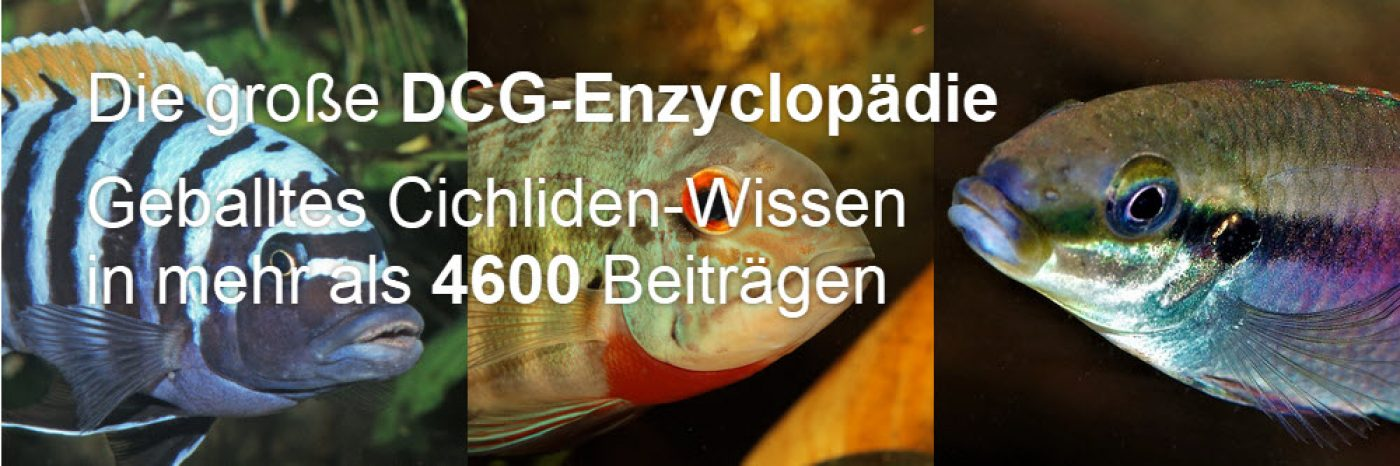 DCG Enzycolpädie
